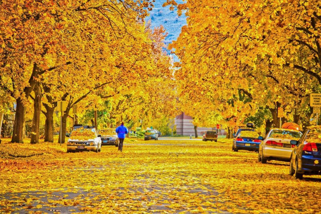 Fall leaves on the trees and ground on a street in Missoula, Montana.