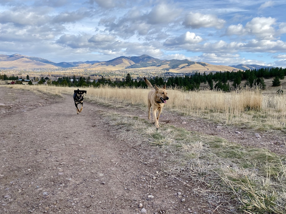 Missoula is full of dog-friendly trails, such as the trails at Blue Mountain Recreation Area.
